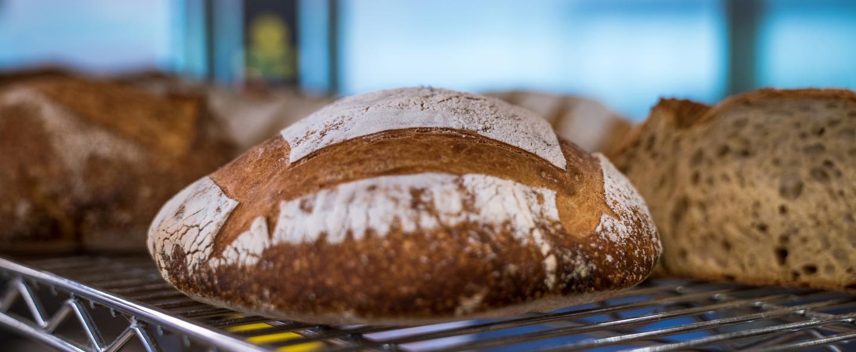 Sourdough Bread, Quest for Sourdough
