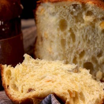 Autumn Panettone, durum wheat sourdough, spelt sourdough, durum wheat sourdough first overview