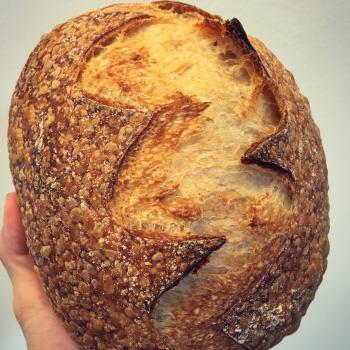 Autumn Panettone, durum wheat sourdough, spelt sourdough, durum wheat sourdough second slice