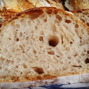 Basic Levain All about Flour first overview