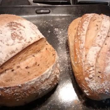 Catherine's Recovery Starter Sourdough loaf second overview