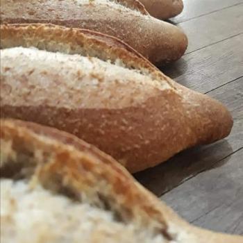 Conchita Whole wheat Bolillo Sourdough first overview