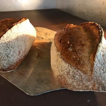 Haensel Wheat Sourdough first overview