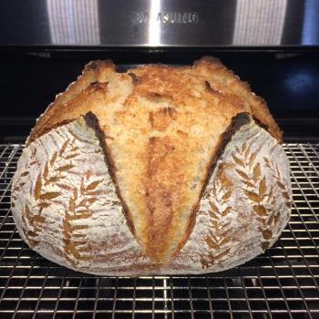 Iris  Sourdough boule first overview