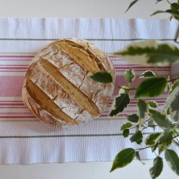 Janko Bread and potica first overview