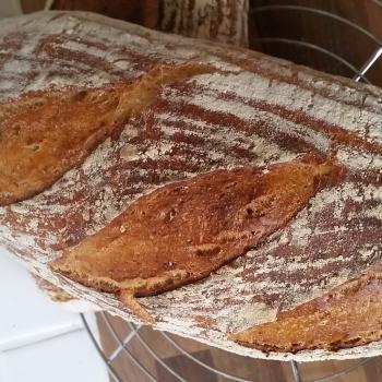 Ms. Marple Sourdough white bread first overview