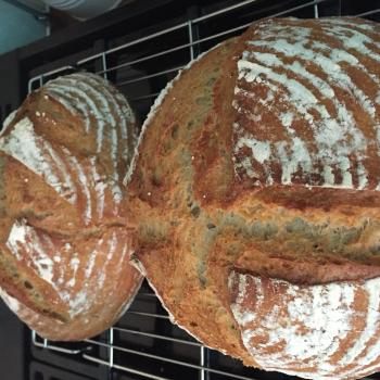 Neeny Peasant bread first overview