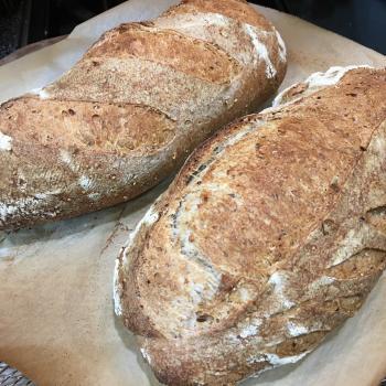 Pica Multigrain bread first overview
