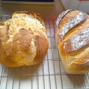 Poemeltje Sourdough loafs first overview