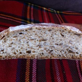 Prunus Breads second overview