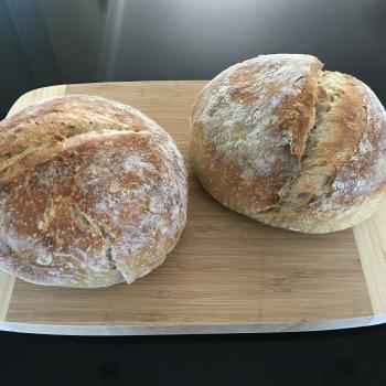 Sozzy (S for Sourdough and Ozzy for Aussie)  first overview
