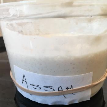 Assam front shot
