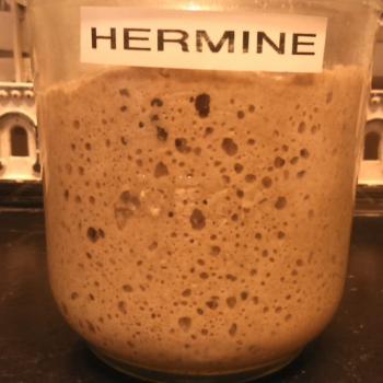 Hermine recipe