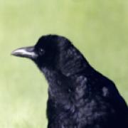profile picture G M